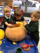 Exploring the pumpkin